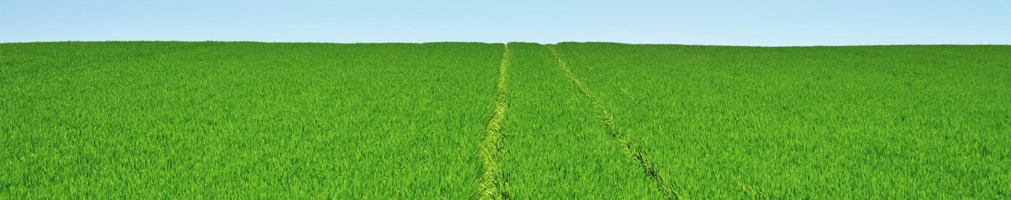 Grünes Feld mit Trekkerspur